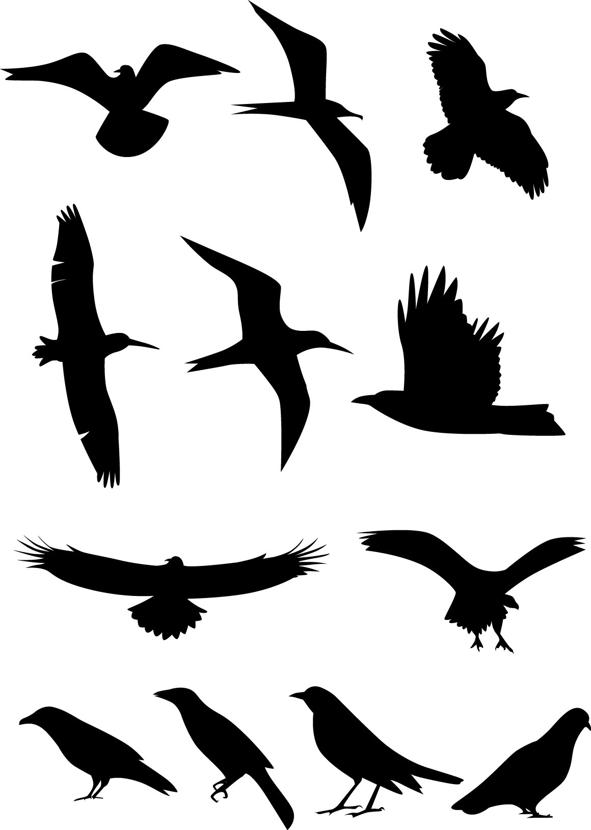 Bird silhouette png