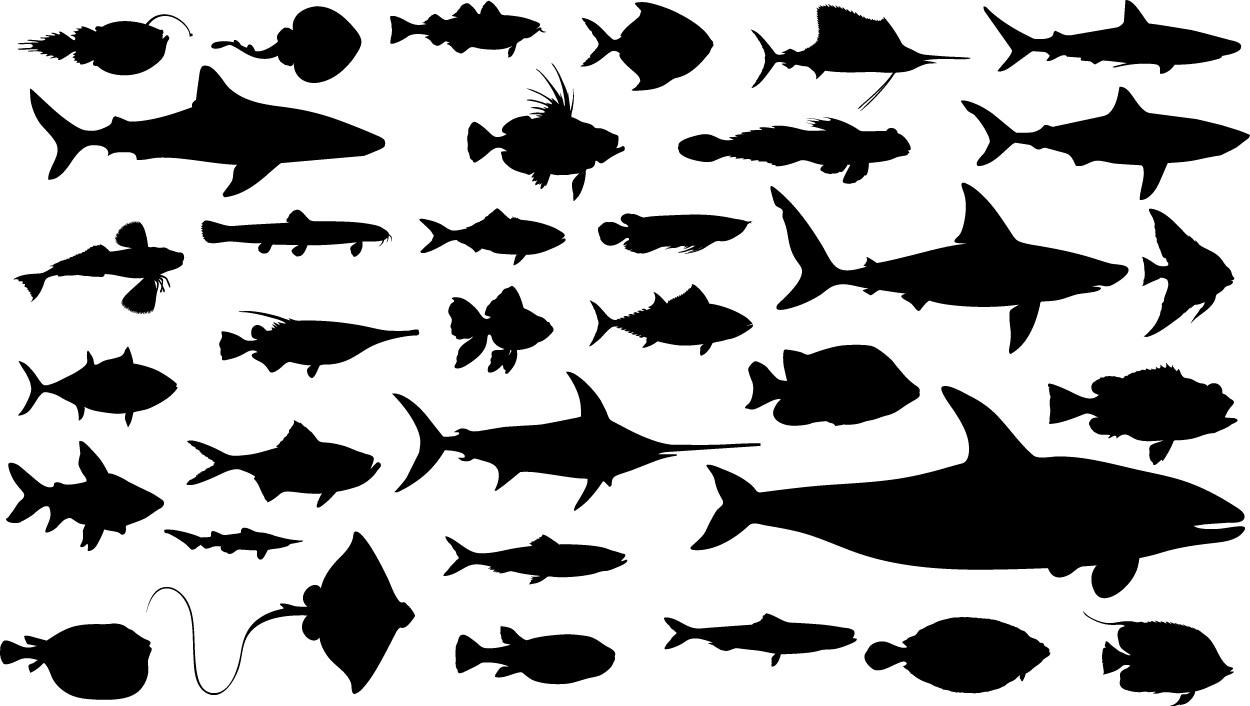 Fish silhouettes png