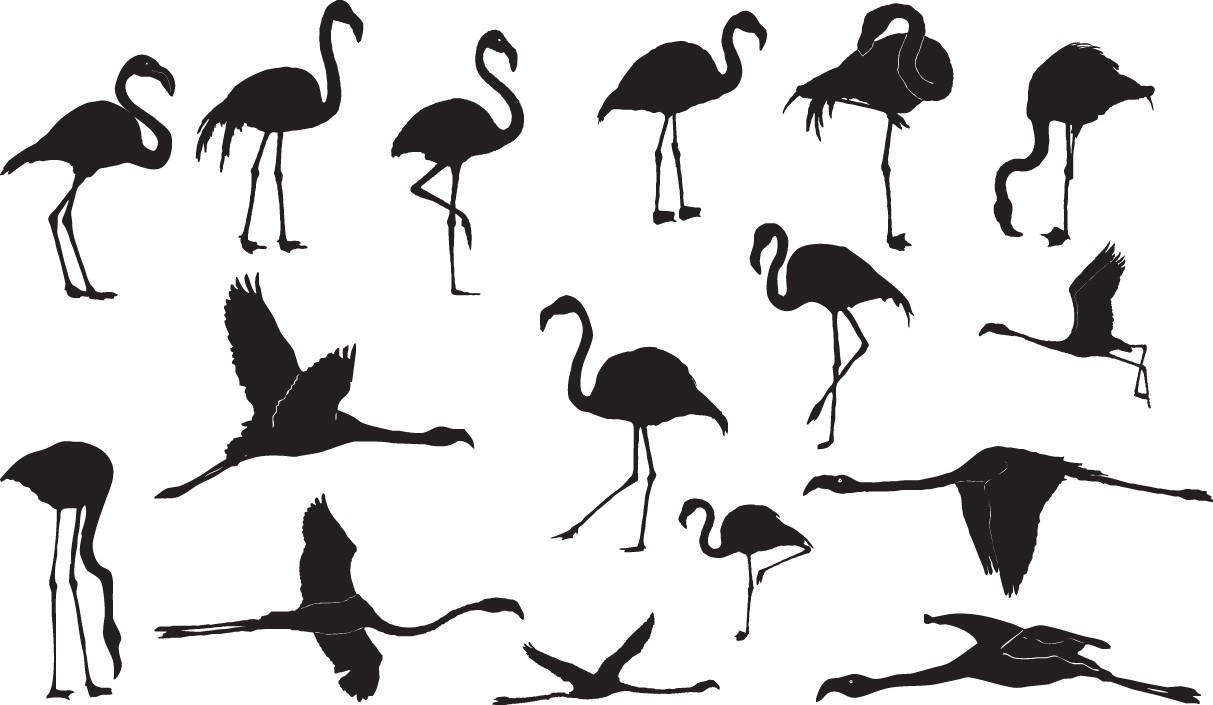 Flamingo silhouettes png