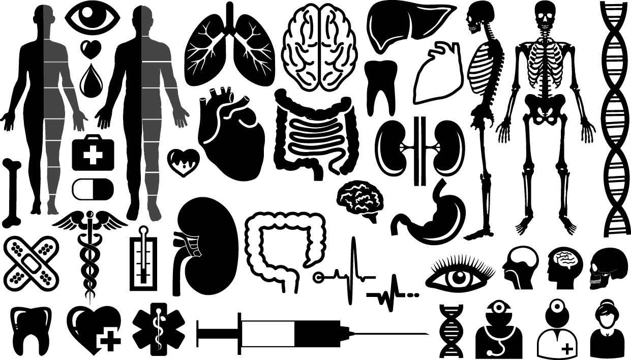 Organs symbols silhouette png