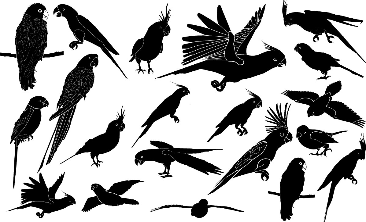 Parrot silhouettes png