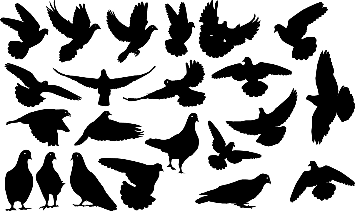 Pigeons silhouettes png