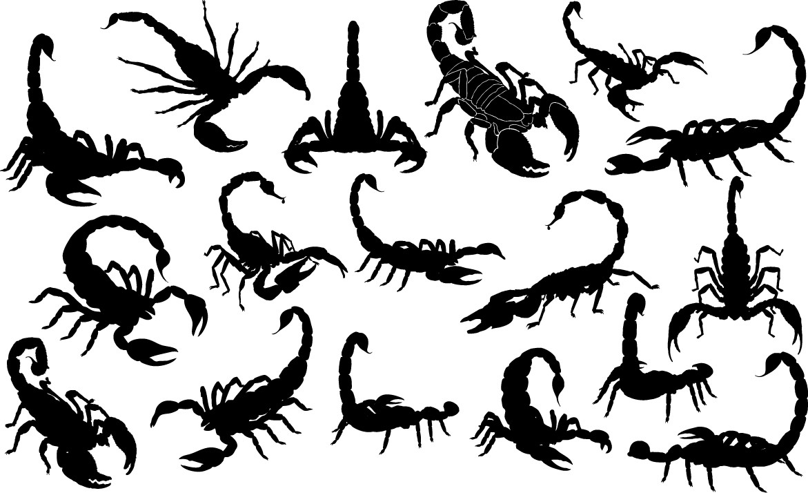 Scorpion silhouettes png