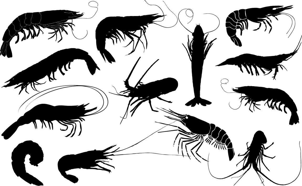 Shrimps silhouette png