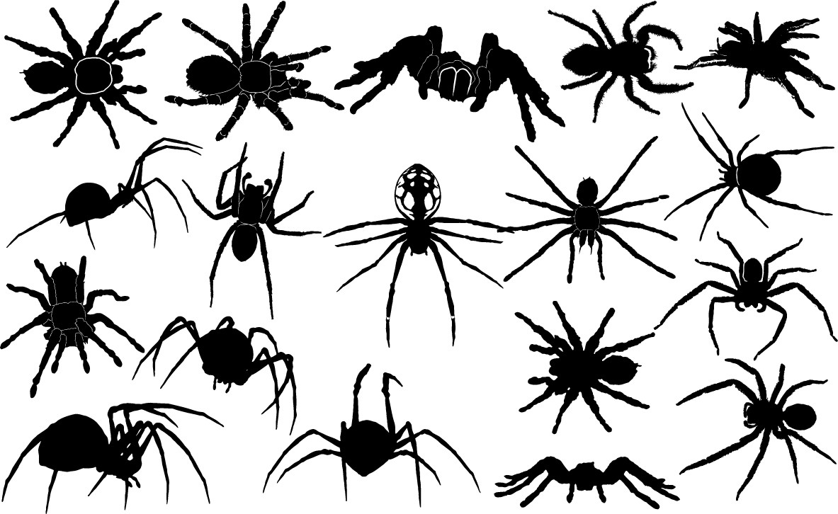 Spider silhouettes png