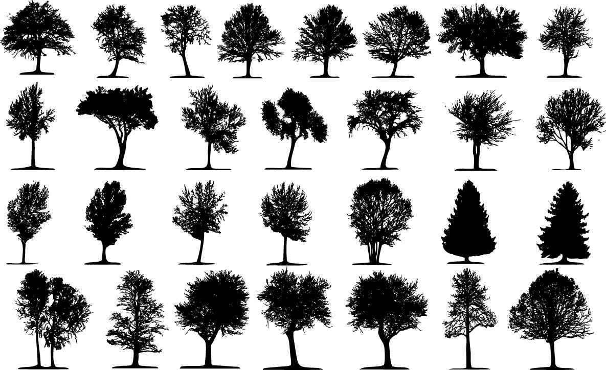 Trees silhouette png